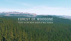 ウッドワン ブランドムービー「FOREST OF WOODONE」